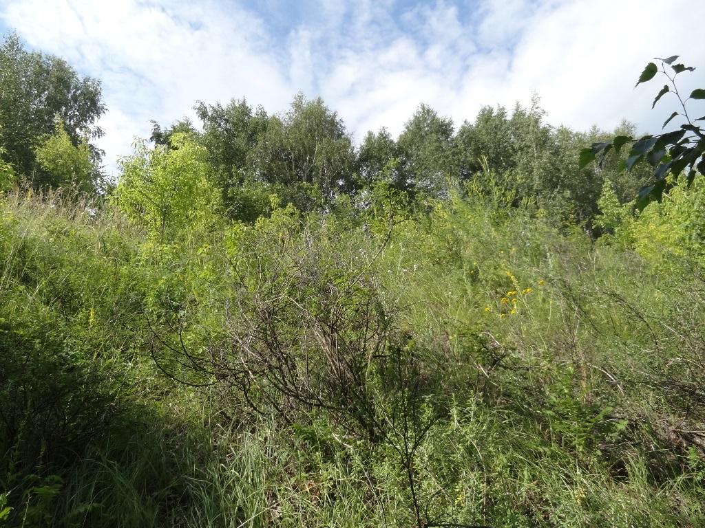Кустарник и трава