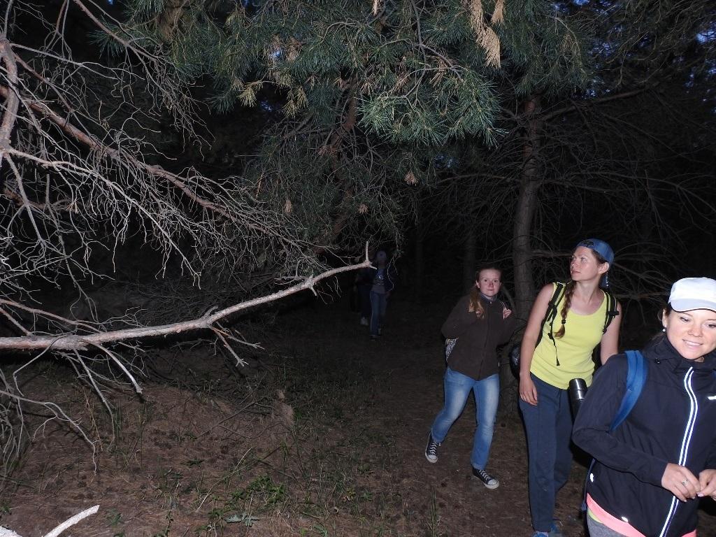 Ночью по лесу