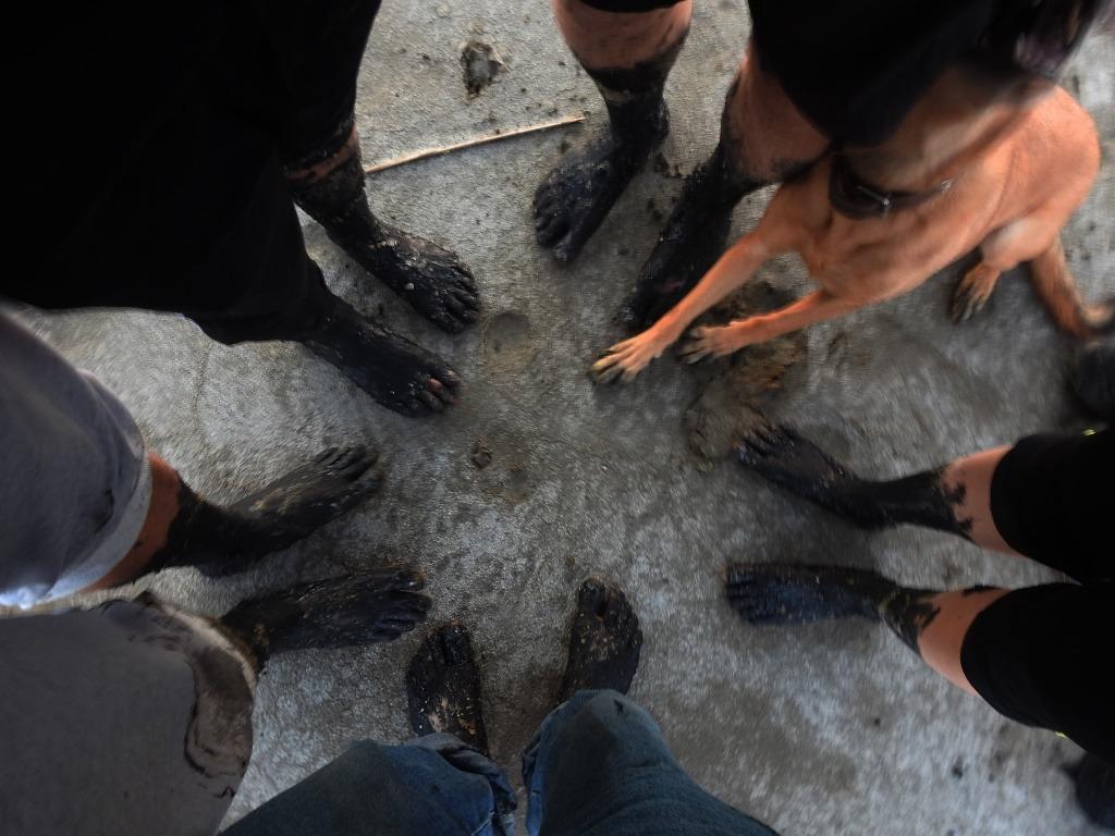 Грязные лапы и ноги