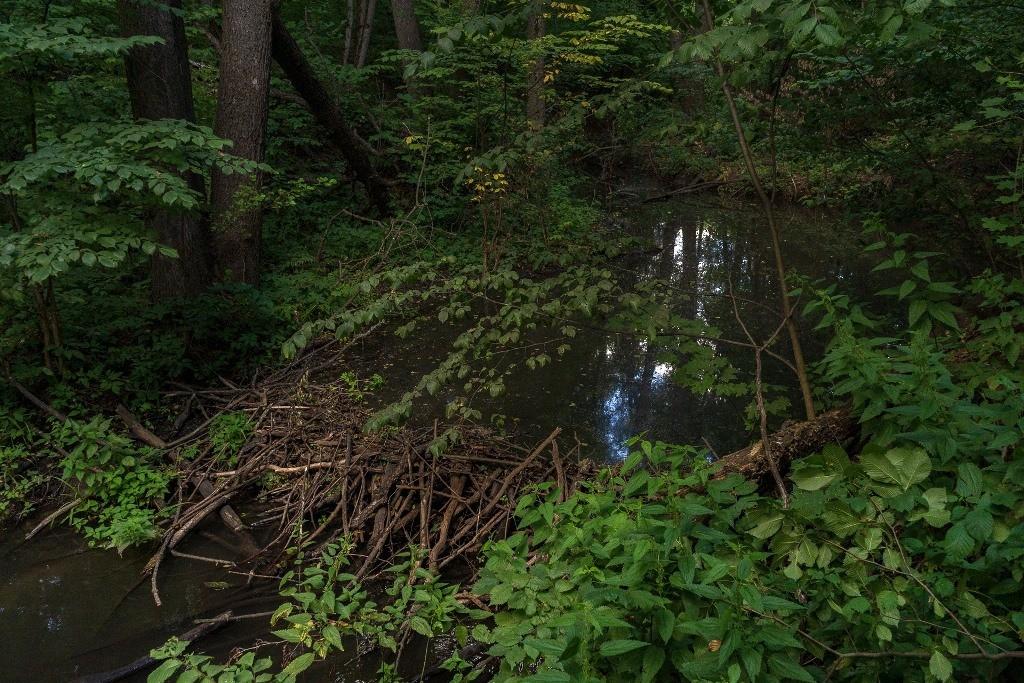 Плотина и запруда в лесу