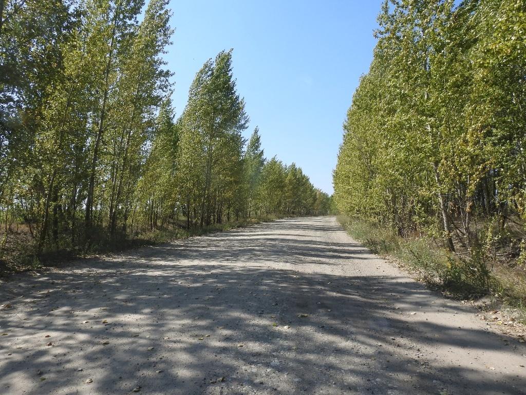 Дорога на Барсучий