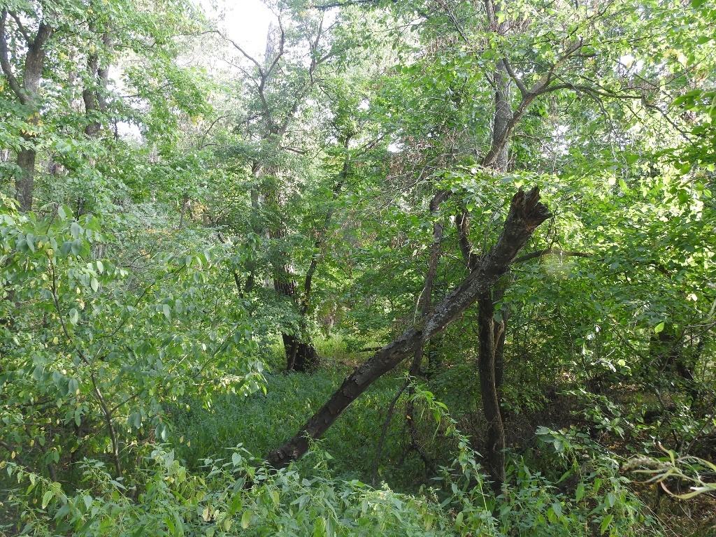 Пойменный лес