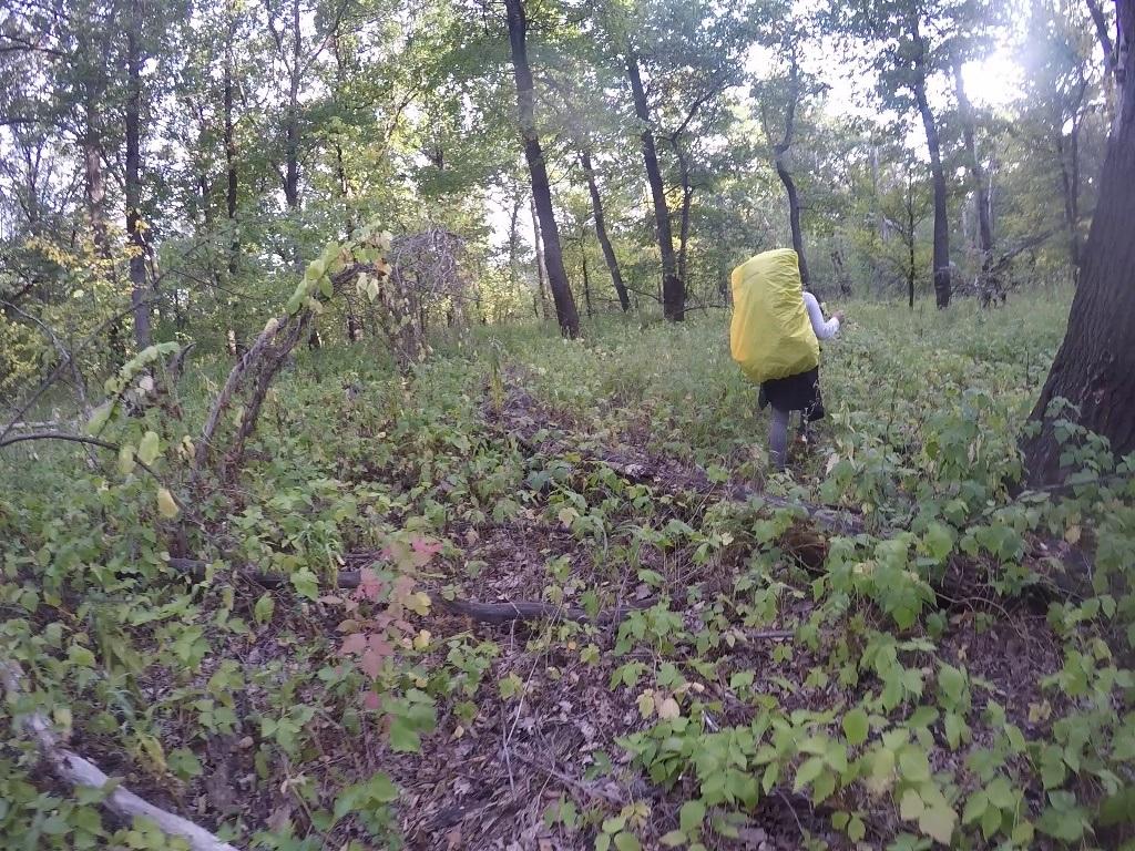 Земляника в лесу