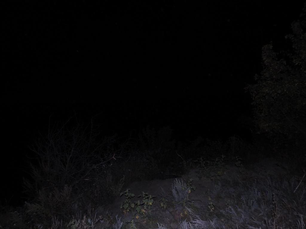 Темные кусты