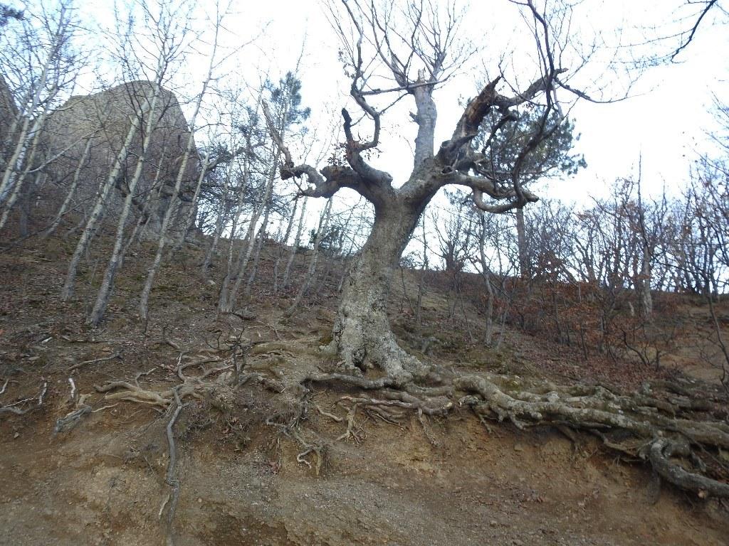 Старое дерево в долине привидений
