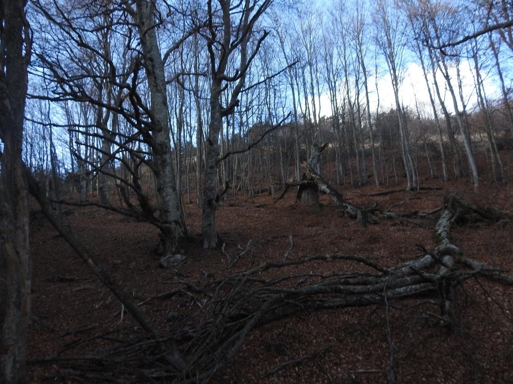 Лес на горе Демерджи