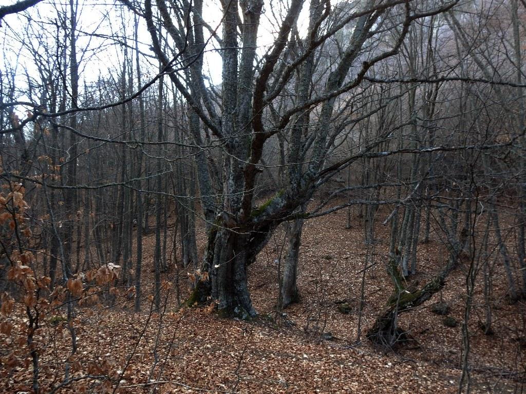 Лес на восточном склоне Южного Демерджи