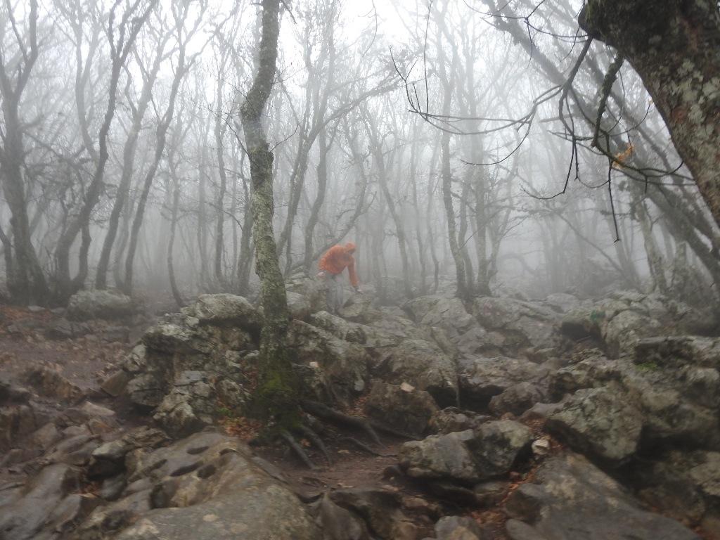 Лес на Ай-Петри в тумане
