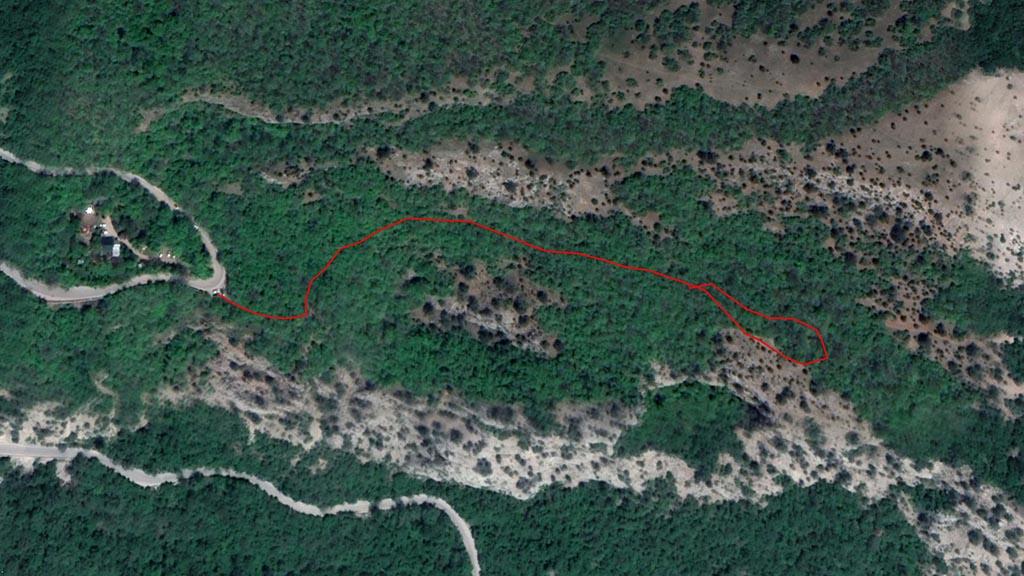 Маршрут по лесу