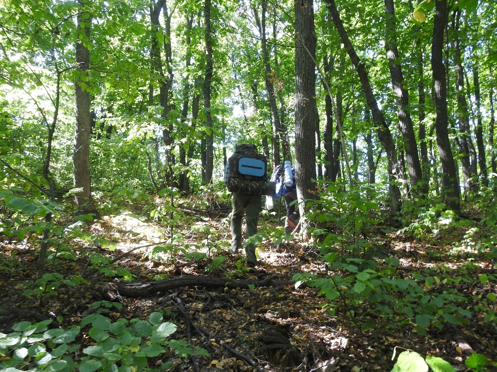 С рюкзаками по лесу