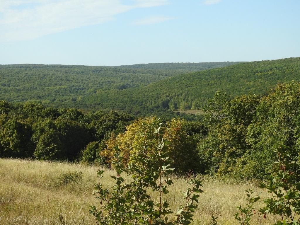 Лесные холмы