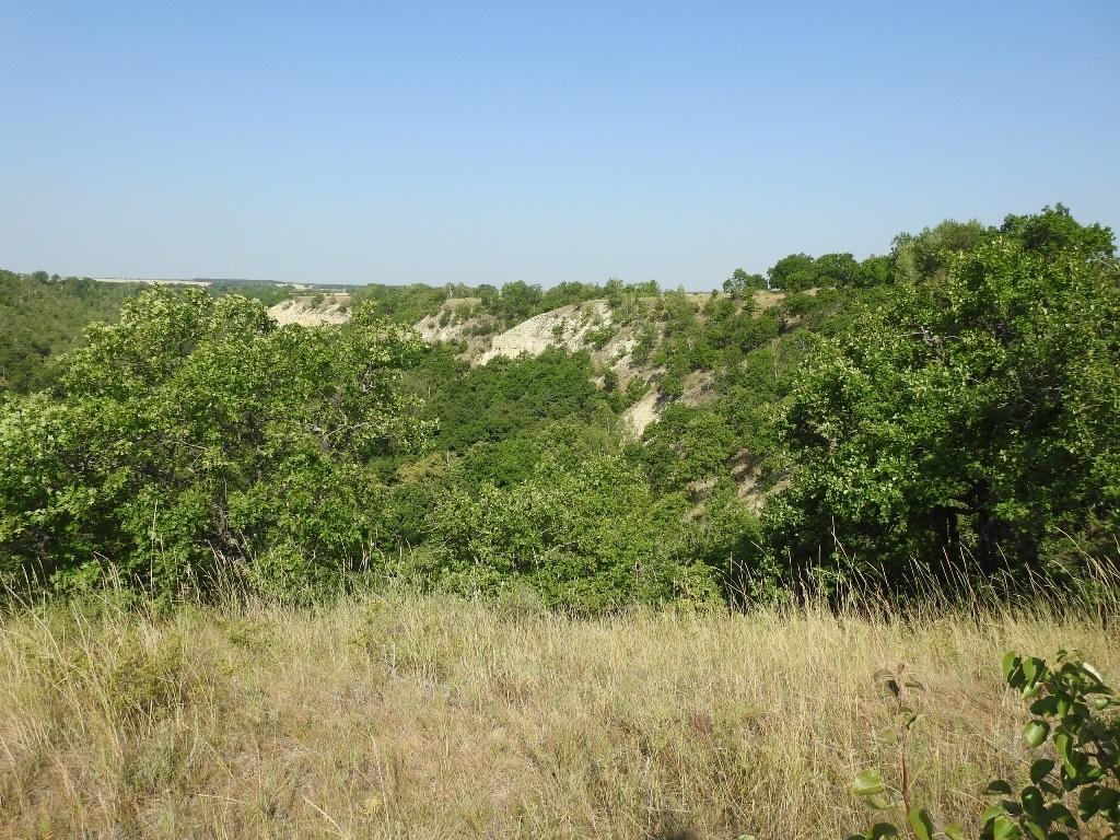 Северная часть Даниловского оврага