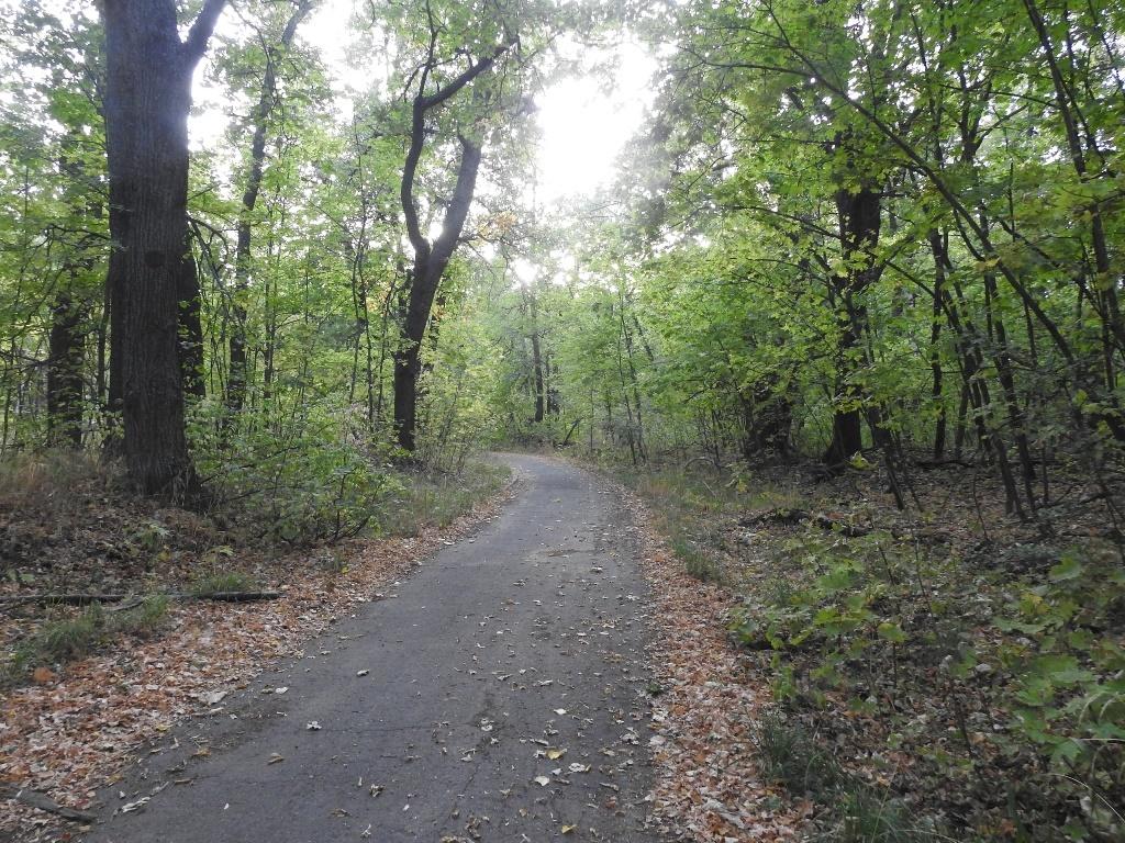 Старая дорога летнего лагеря