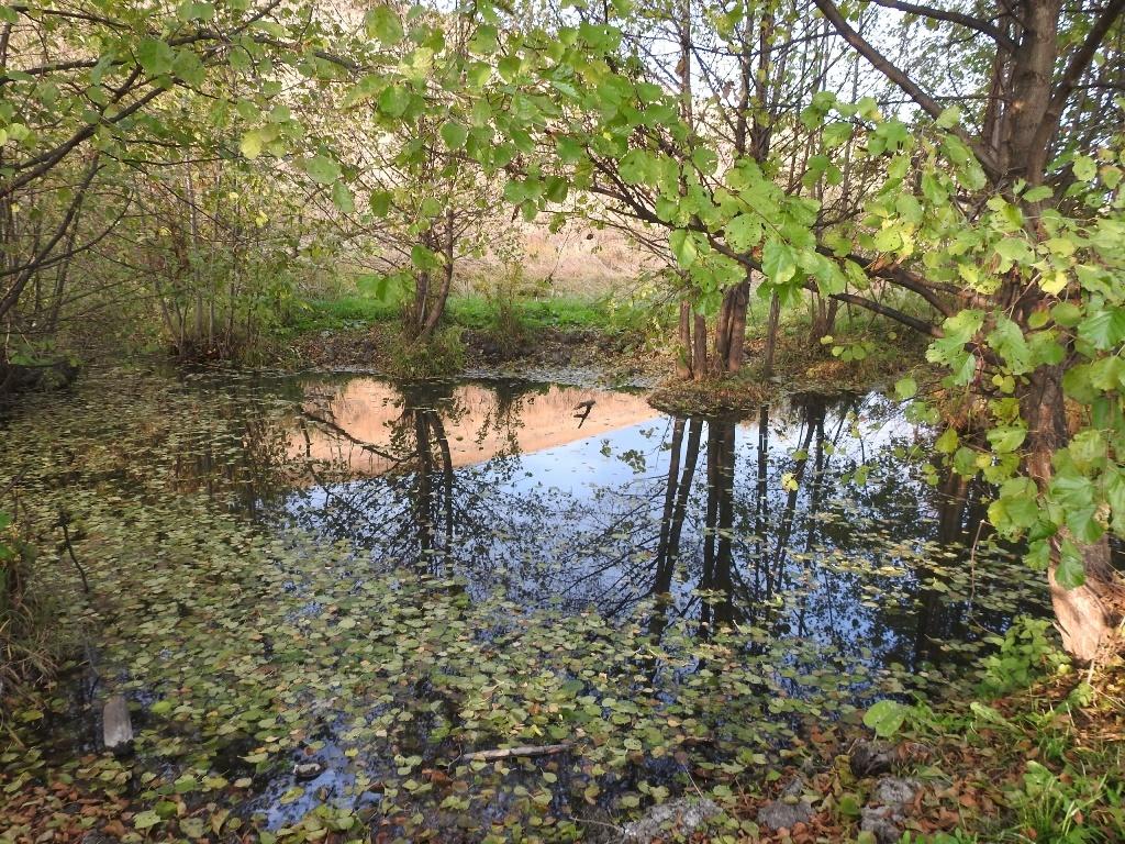 Стоячий ручей
