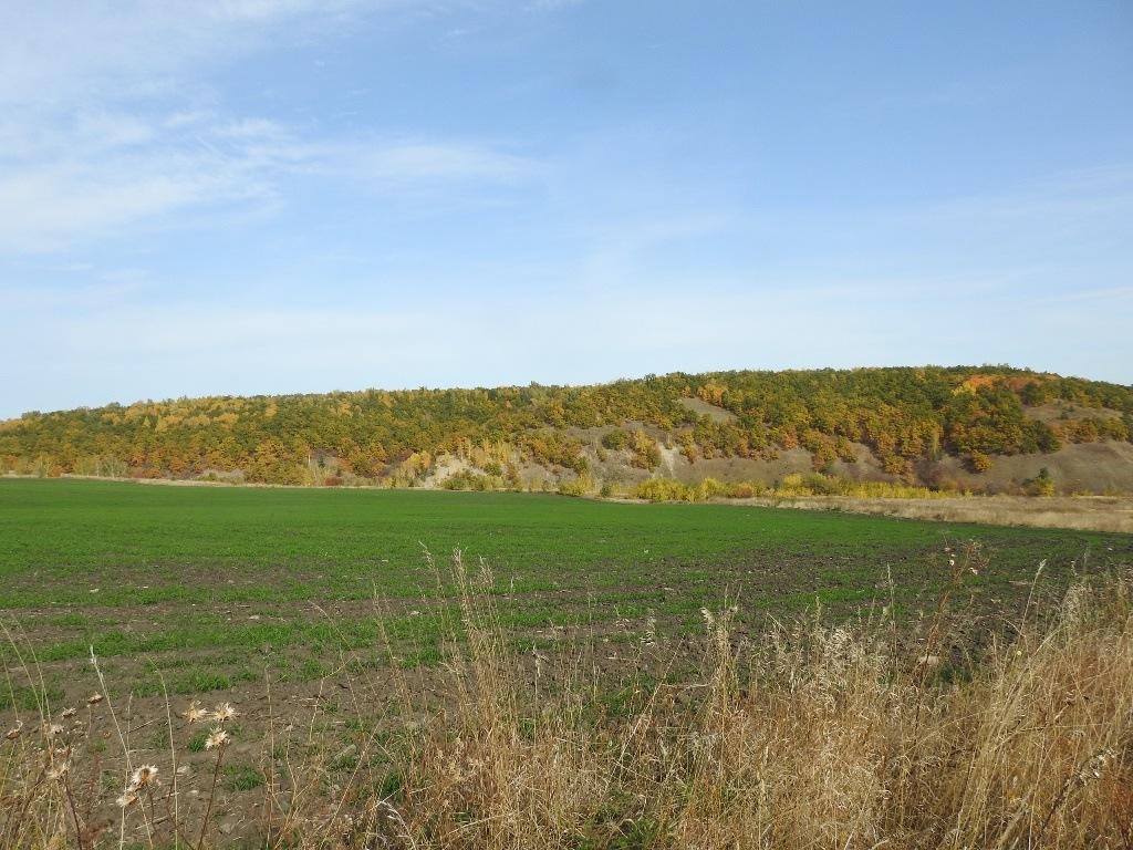Холмы вдоль оврага Кривой