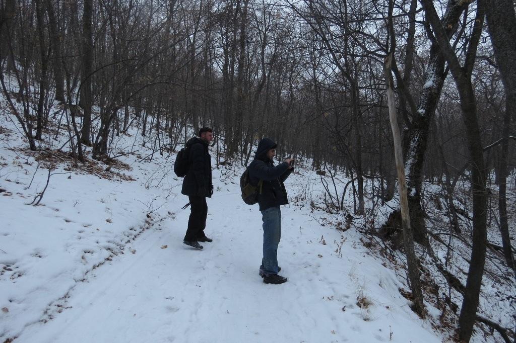 В лесу фото
