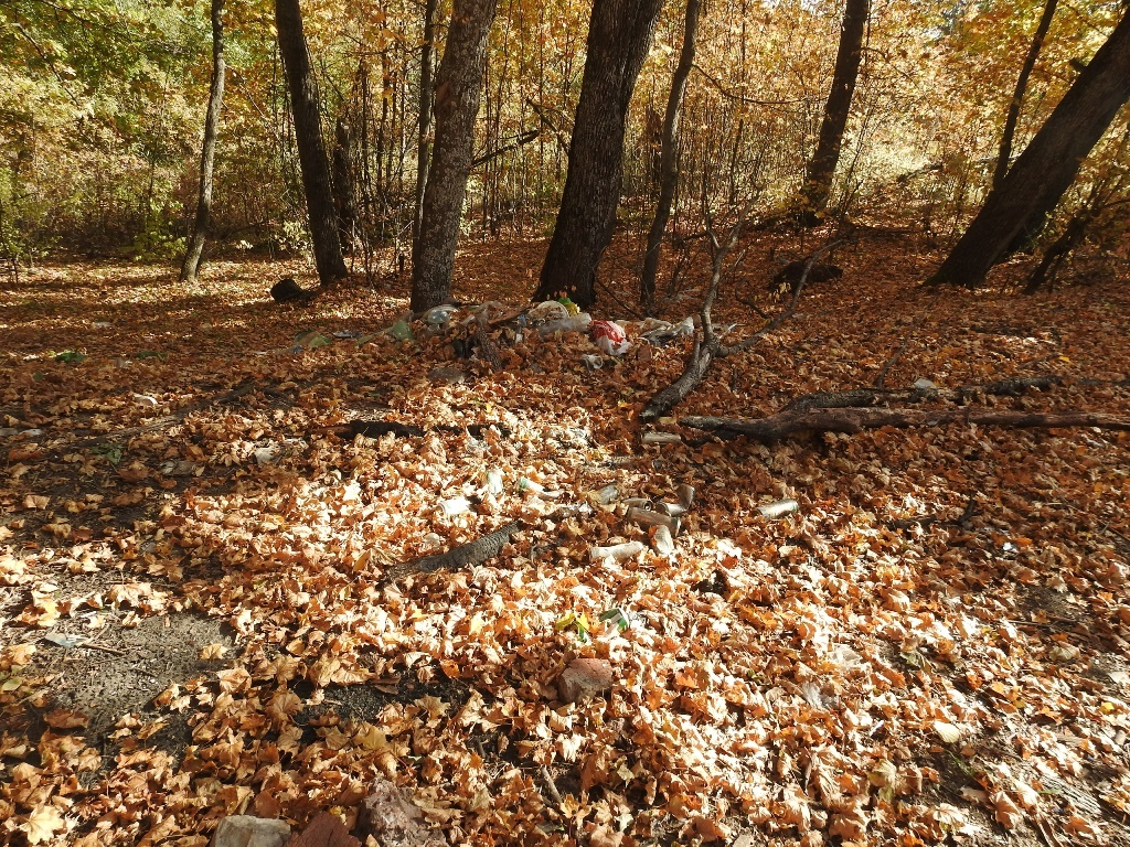 Мусор в лесу