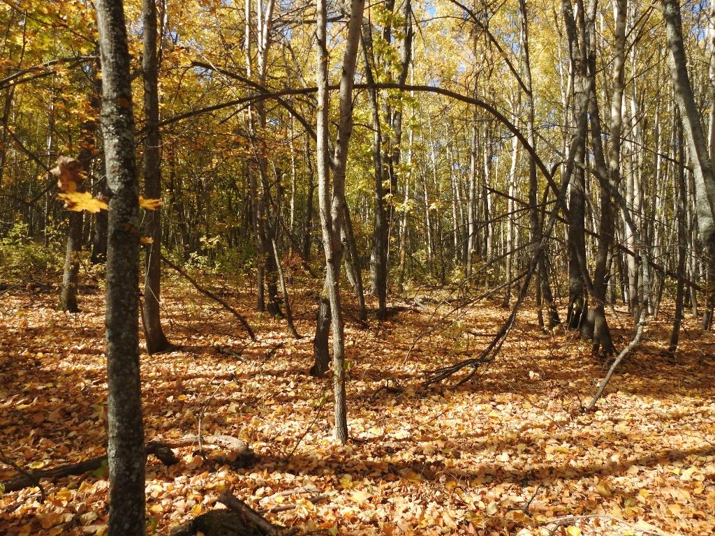 Балтайские леса