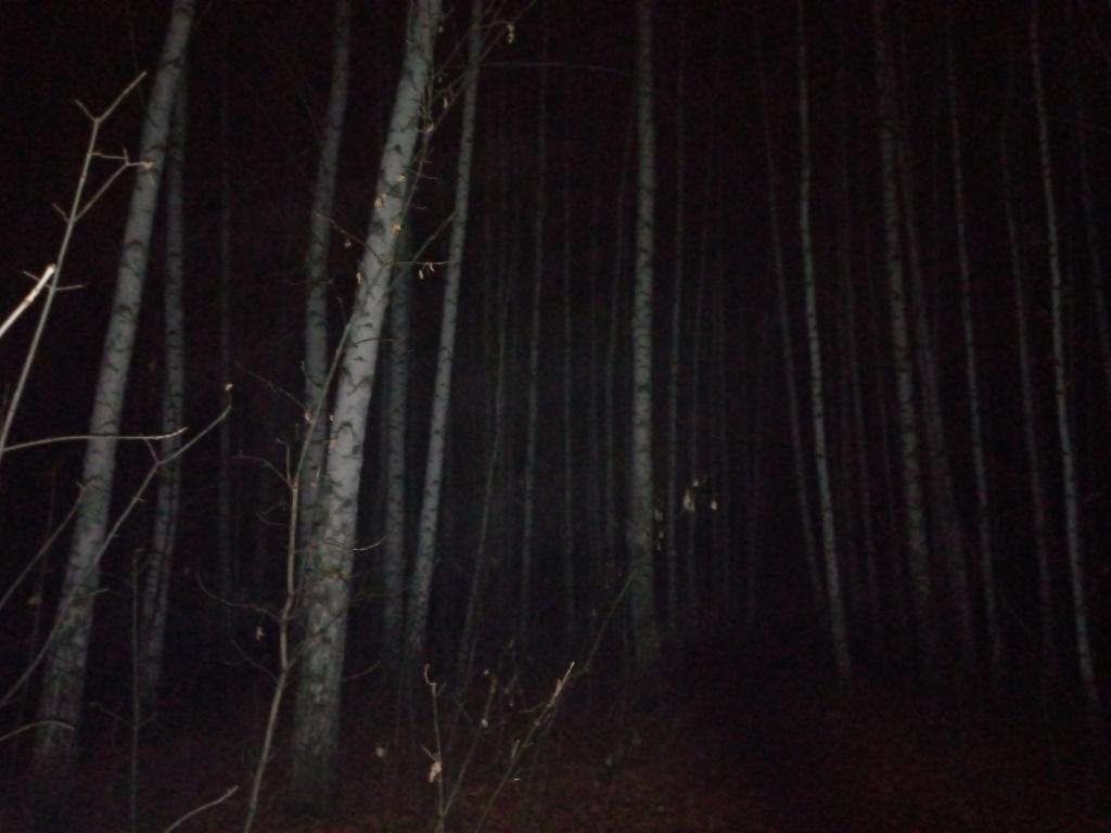 Берёзы ночью