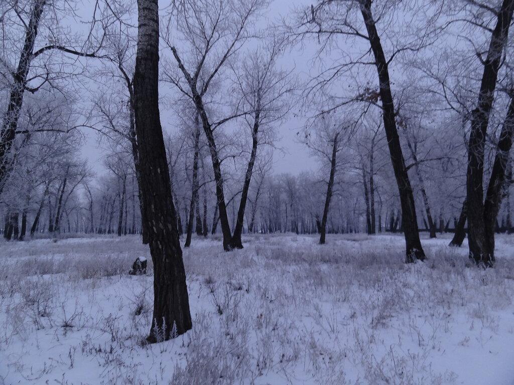 Тинь-Зинь зимойй