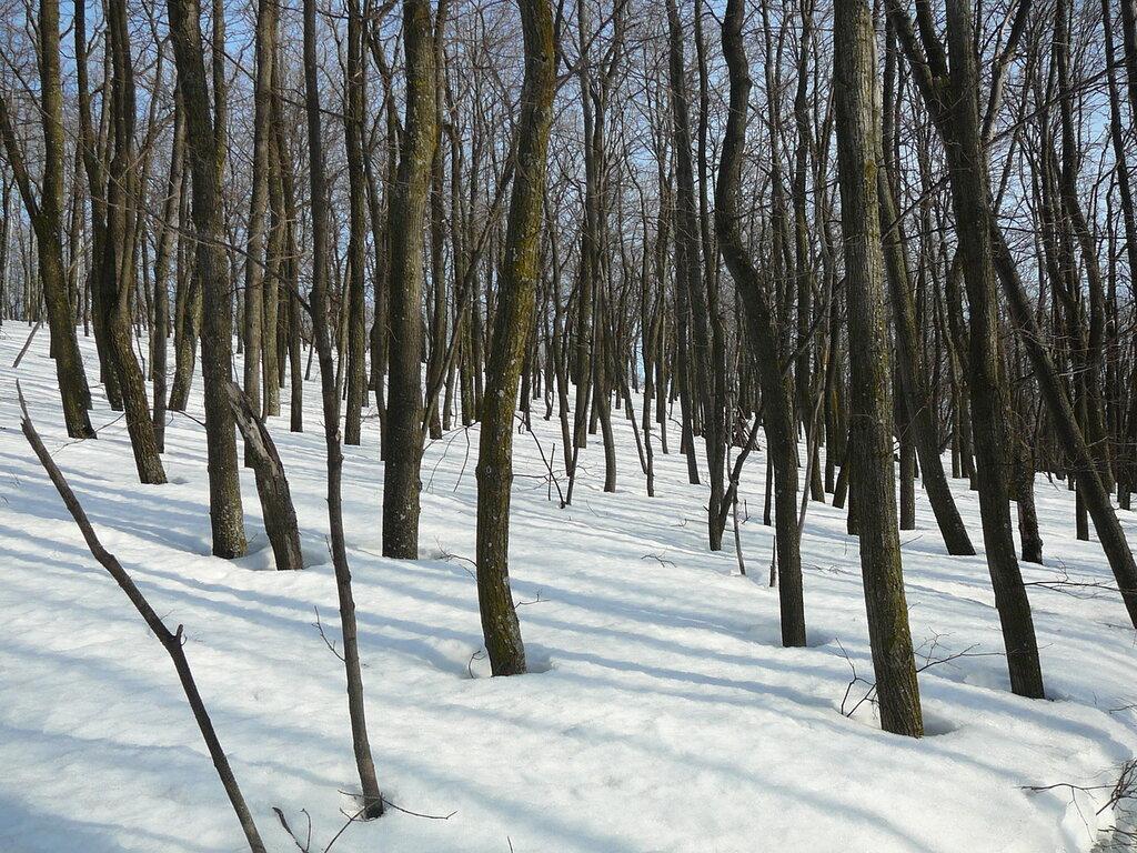 Кумысная поляна зимой