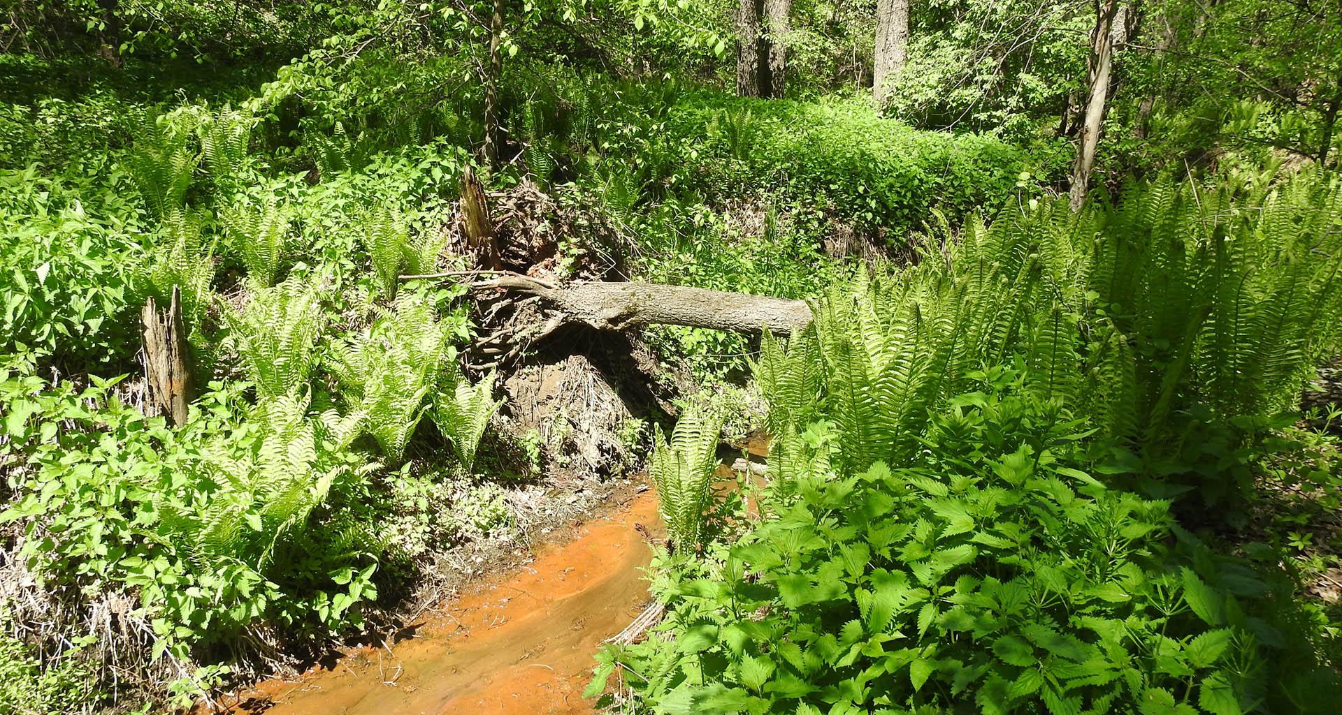 Лесной ручей на дне оврага