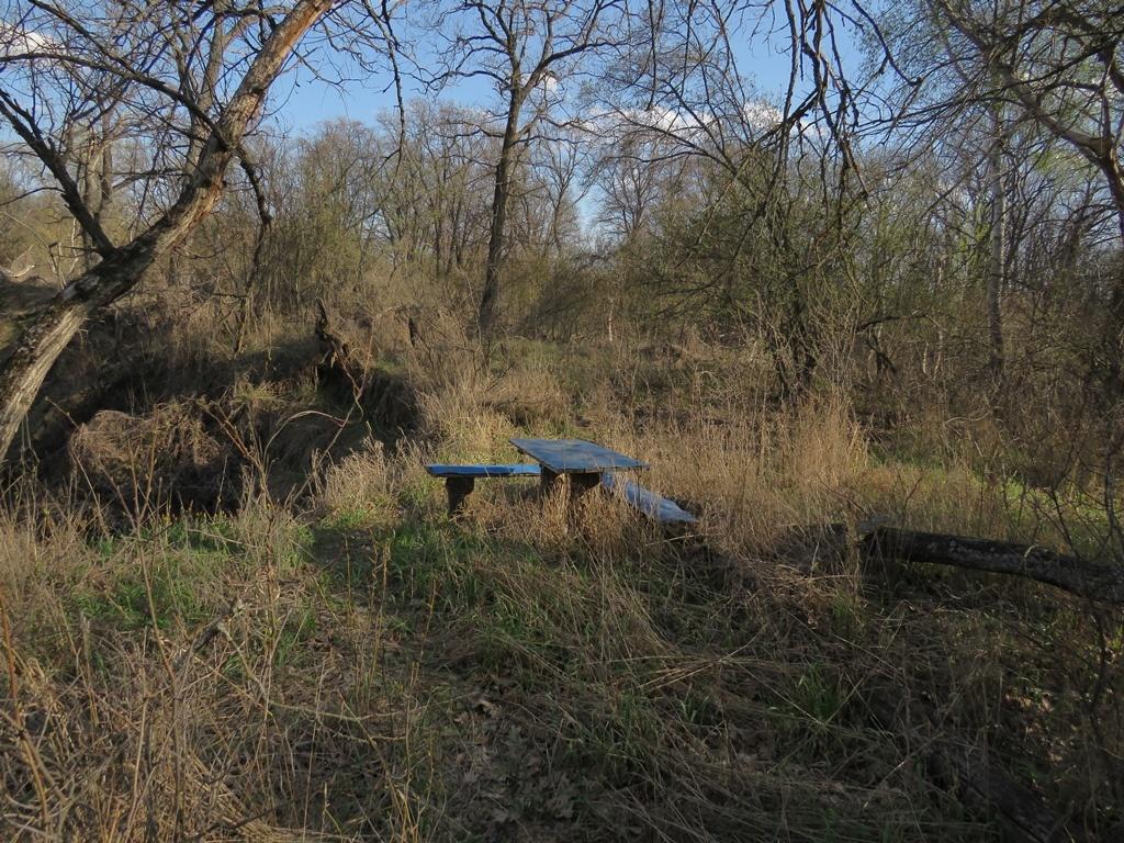 Столик в лесу