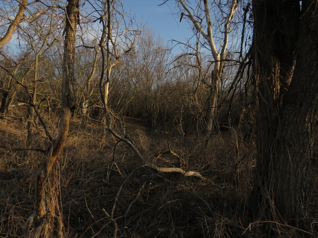 Пойменный лес Медведицы