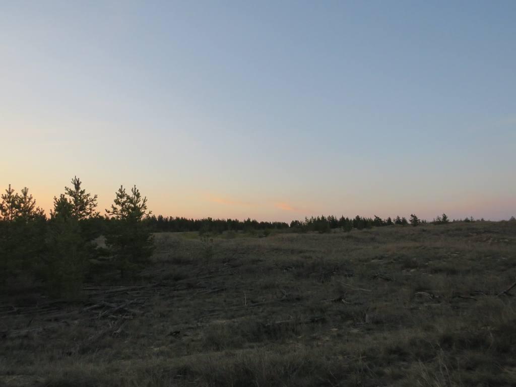 Сосновые леса у поймы Медведицы