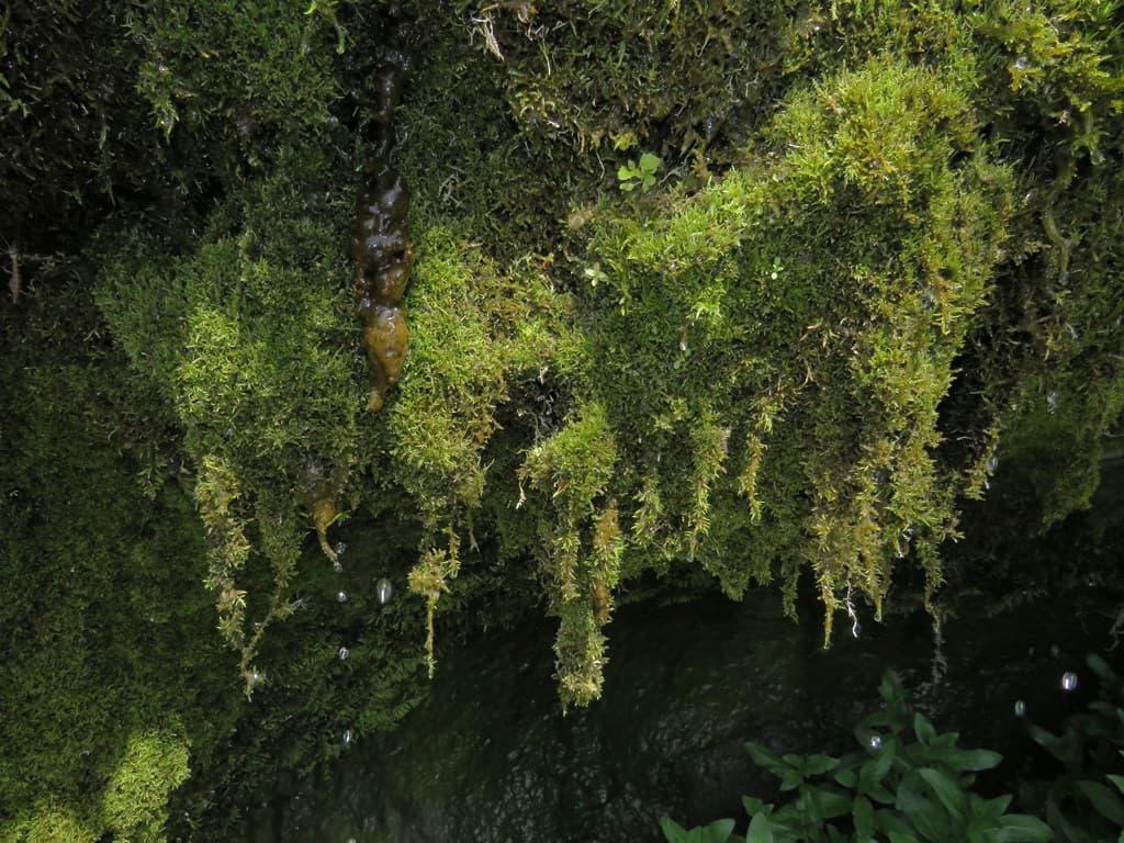 """Водопад """"Плачущая стена"""""""
