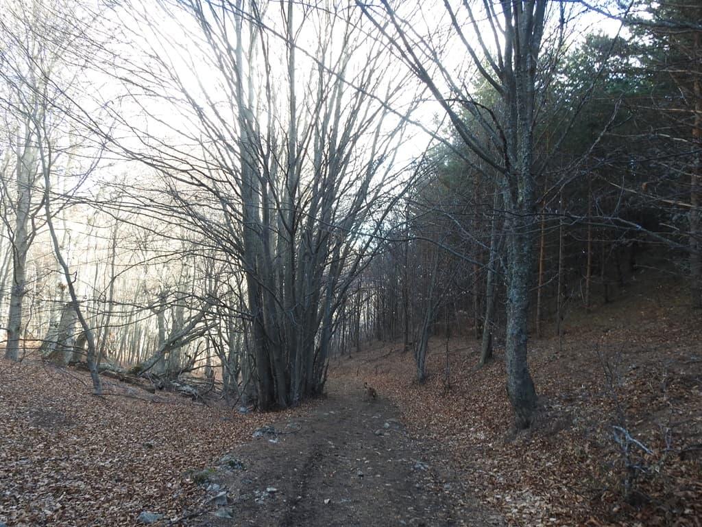 Яйла Демерджи лес