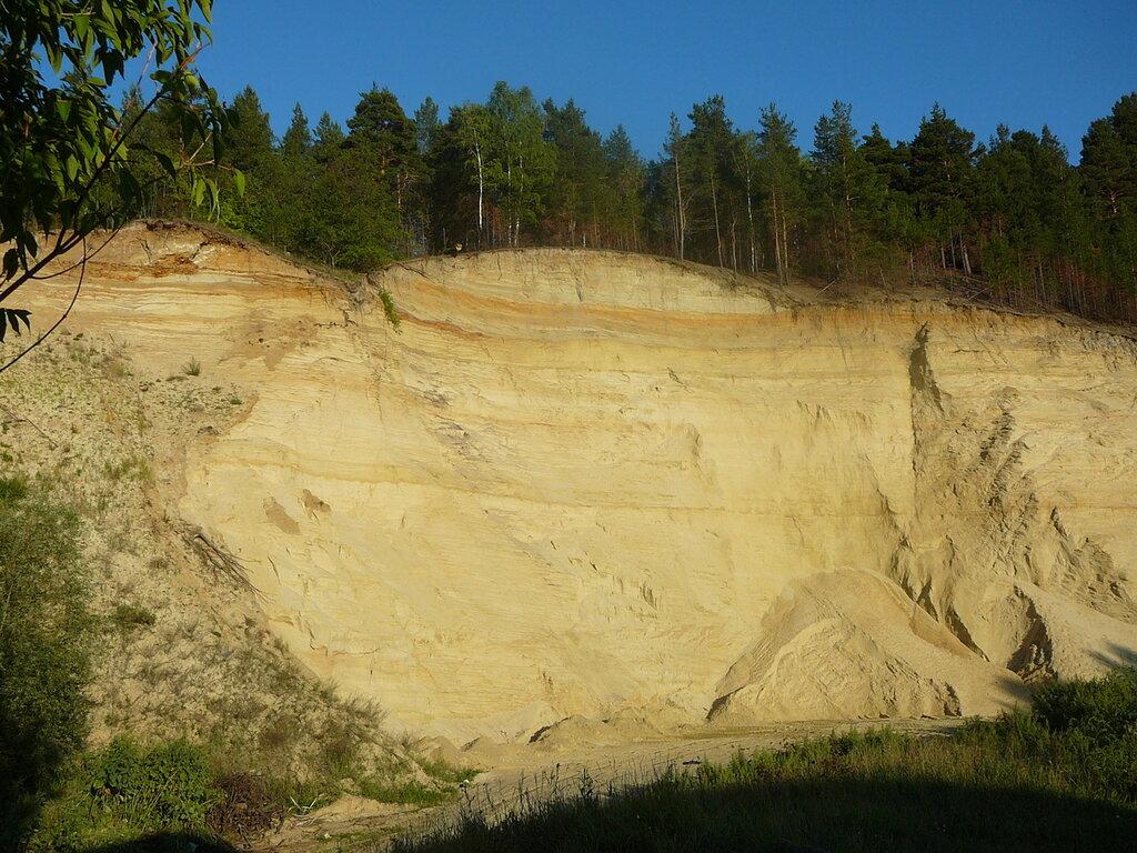 Лес на песках