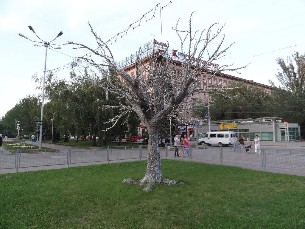 Белое дерево Волгоград