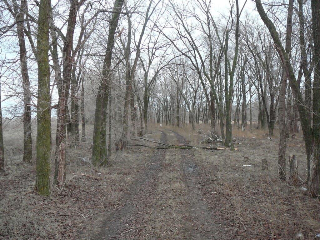 Дорожка через лесопосадку