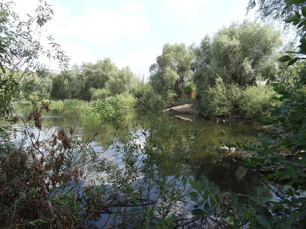 Дачный пруд