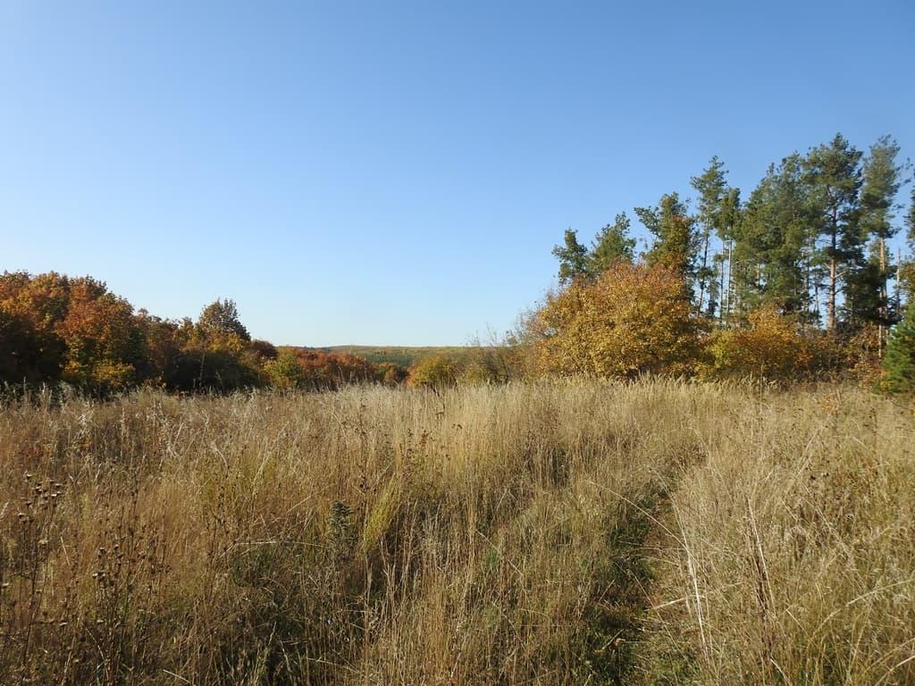 леса к западу от Донгуза