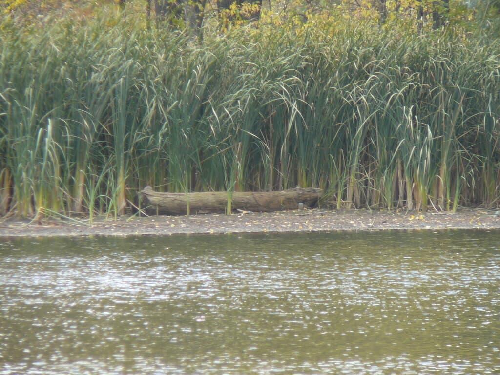 Пионерское озеро