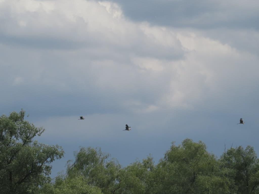 Летят птицы