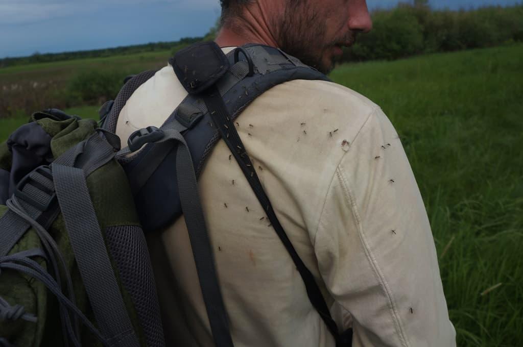 Кусачие комары