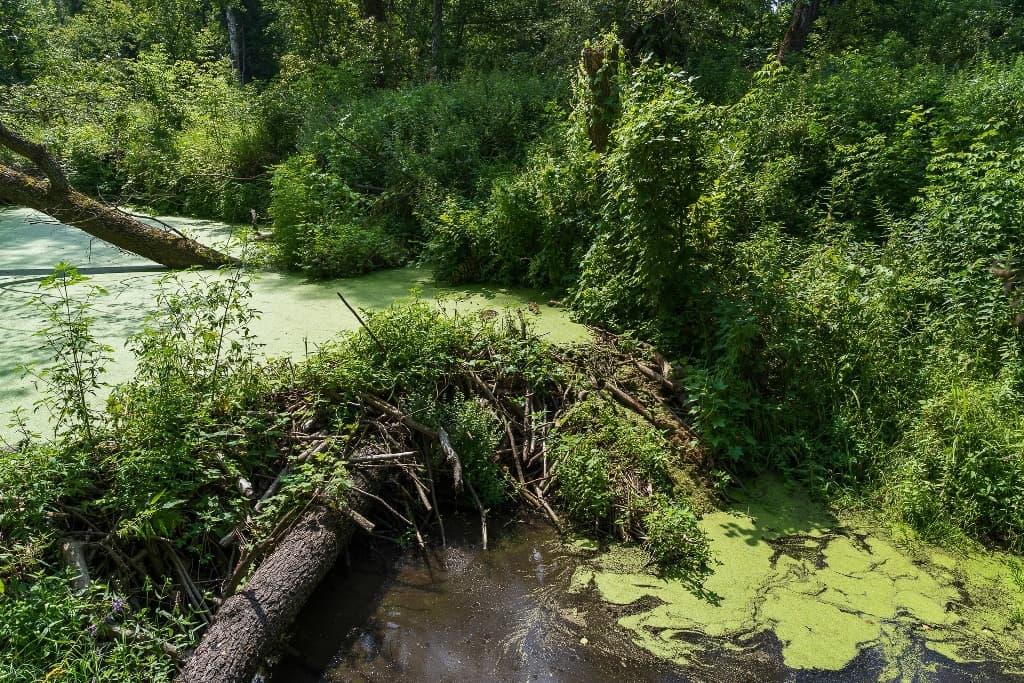 Старая бобровая плотина