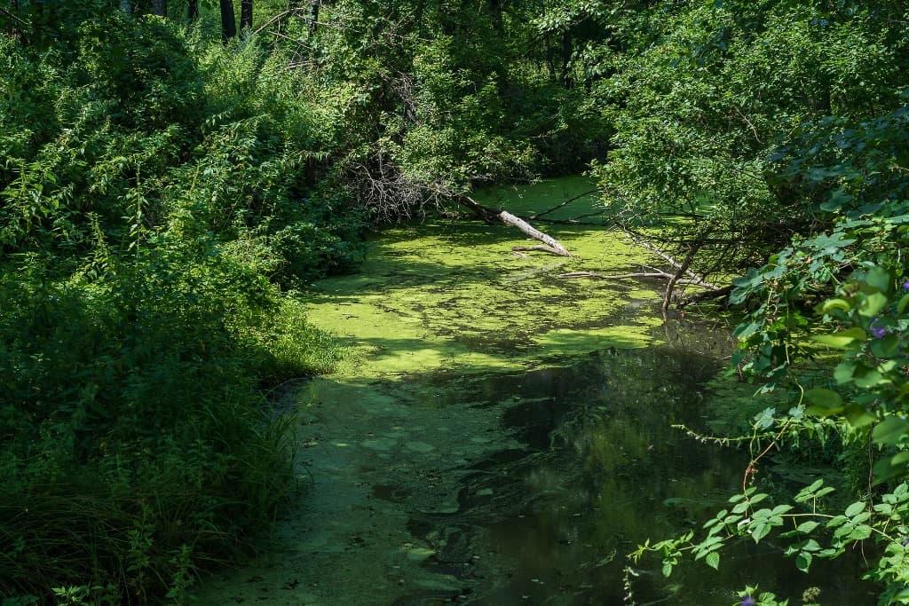 река Сокурка