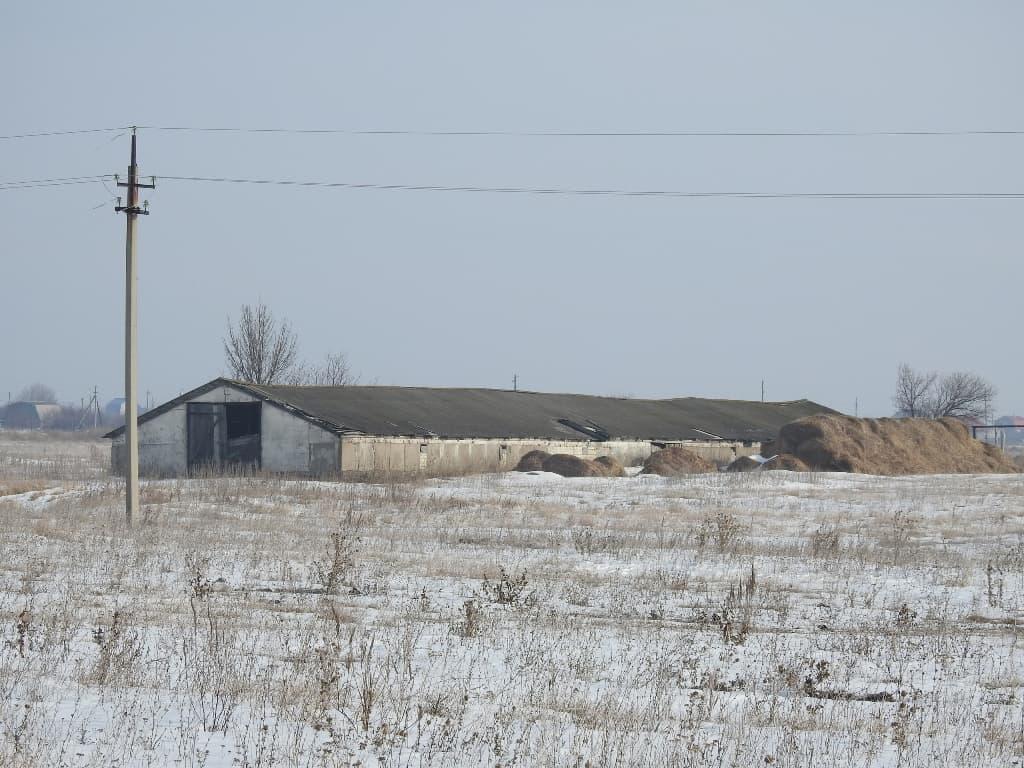 Коровник зимой