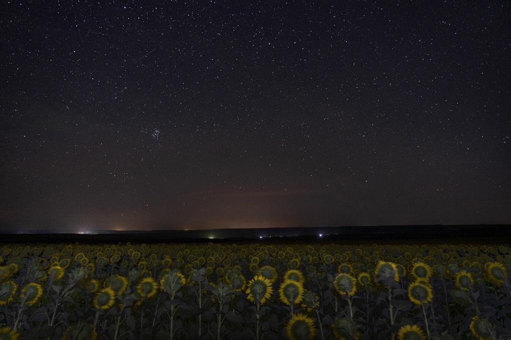 Подсолнуховое поле ночью