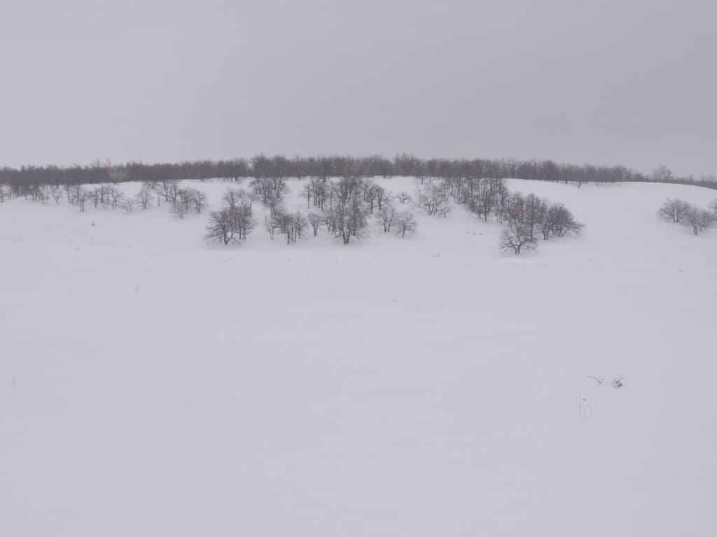 лес Долгая Десятина