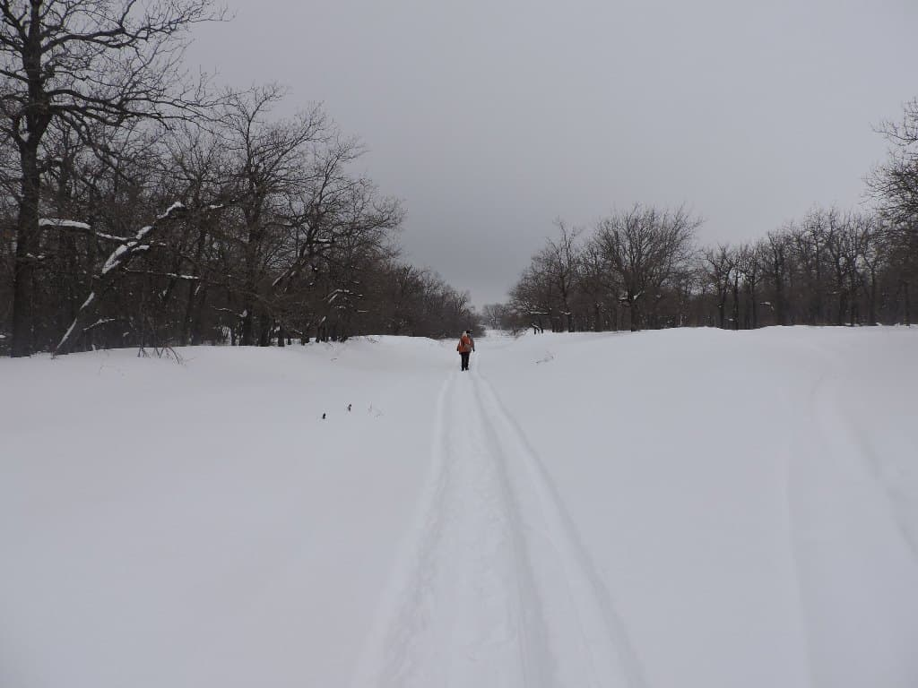 Дорожка снегохода
