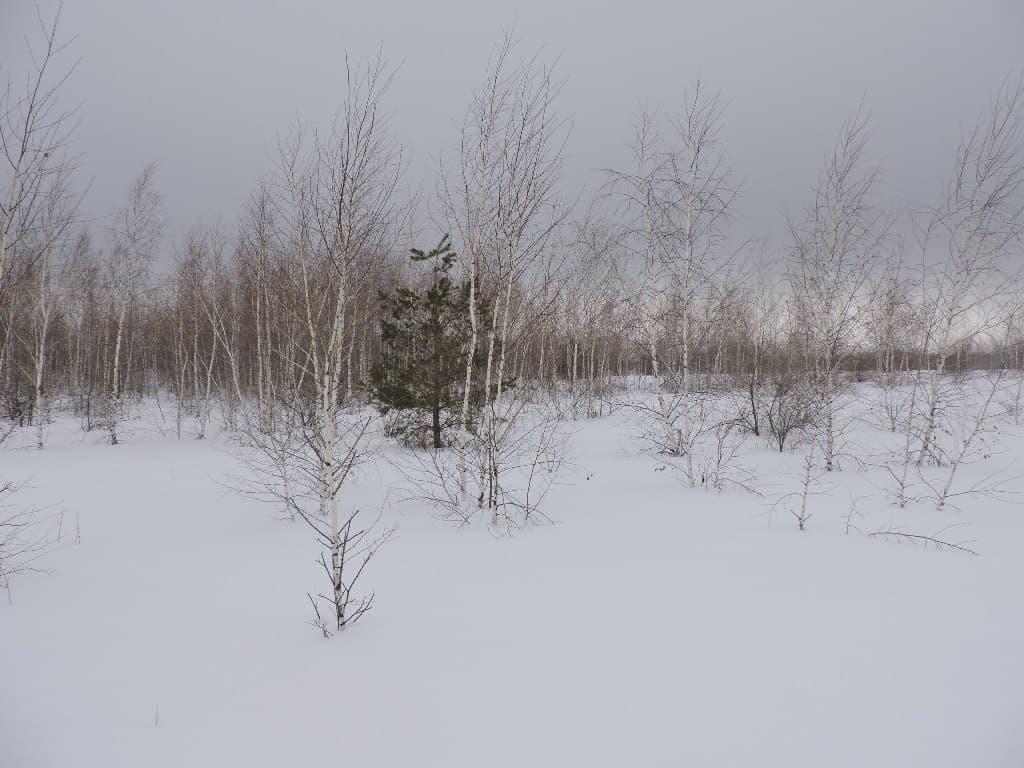 Зимнее редколесье