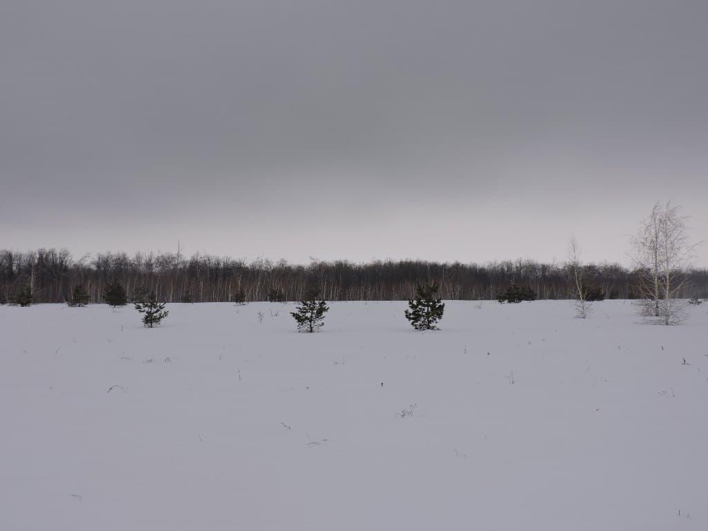 Зимняя опушка леса