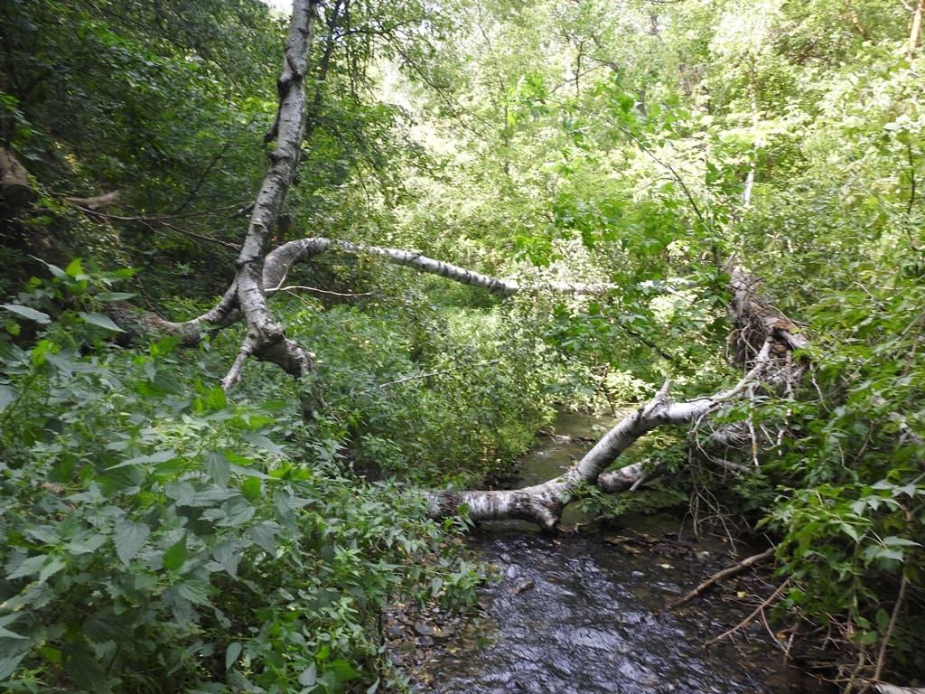 река Щербаковка