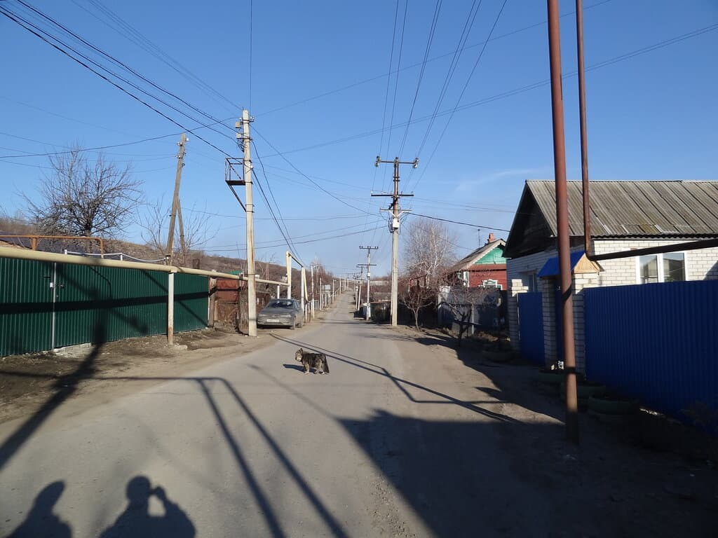 Одинокая дворняга на дороге